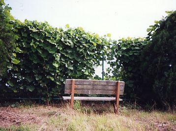 眺めの良いベンチの写真