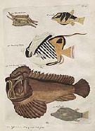 fishzukan.jpg