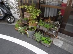青空洋品店前の植物